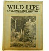 Wild Life nature magazine Douglas English July 1914 animal photos old pictures