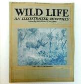 Wild Life old illustrated magazine Douglas English Aug 1914 animal photos rhino
