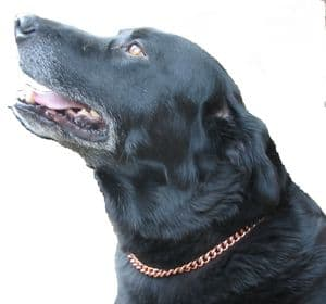 """COPPER MAGNETIC THERAPY DOG CHAIN COLLAR 18"""" TO 25""""  (460mm-653mm)"""