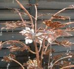 Handcrafted Copper Tree Water Features