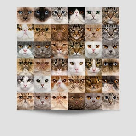 36 Faces of Cats Poster