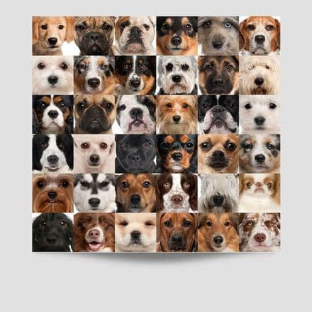 36 Faces of Dogs Poster