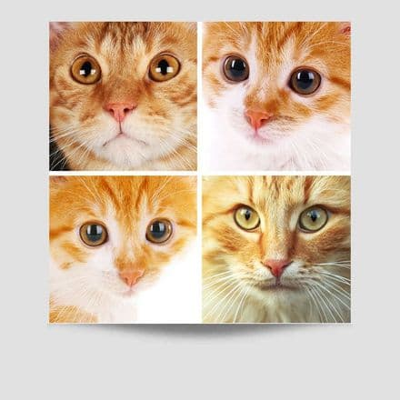 4 Faces of Cats Poster