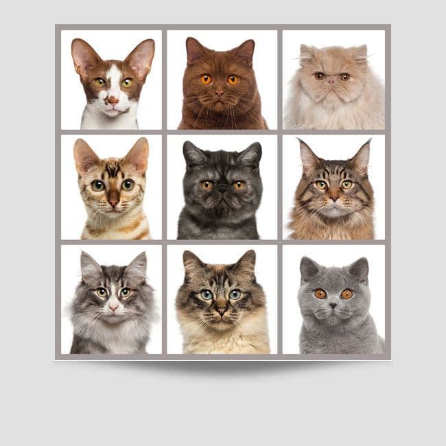 9 Cats Poster