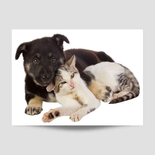 Cat And Puppy Poster