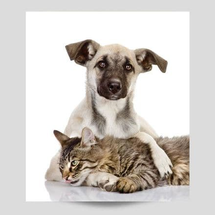 Cat Relaxing With Dog Poster