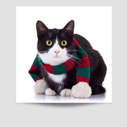 Cat Wearing A Scarf Poster