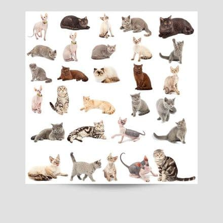 Collection Of Cats Poster