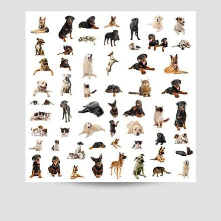 Collection Of Dogs Poster