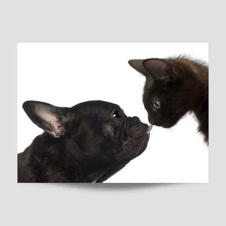 Dog And Cat Kiss Poster