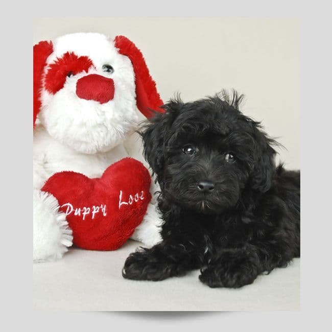 Dog With A Teddy Bear Poster