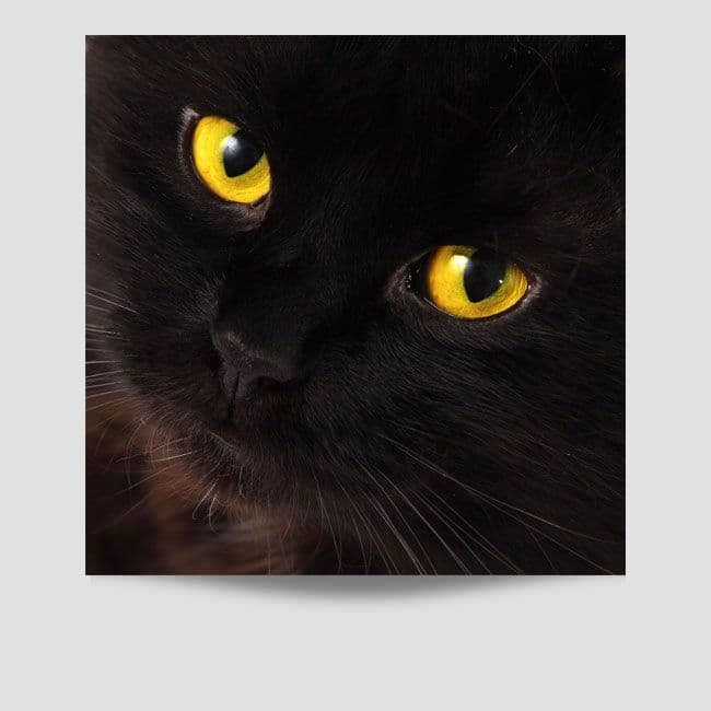 Face of Black Cat Poster