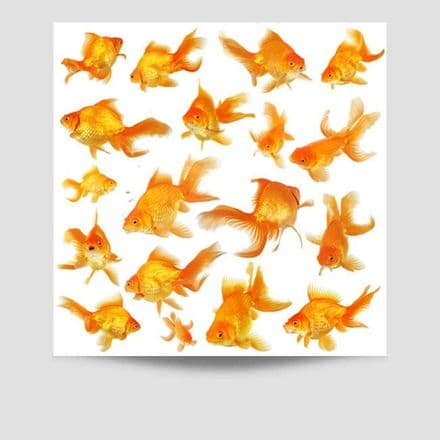 Goldfish Collection Poster