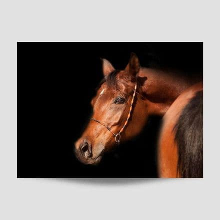 Horse With Dark Background Poster