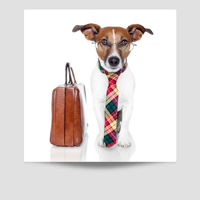 Jack Russell Wearing A Tie Poster