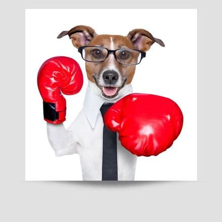 Jack Russell  Boxing Gloves Poster