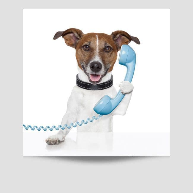 Jack Russell On The Telephone Poster