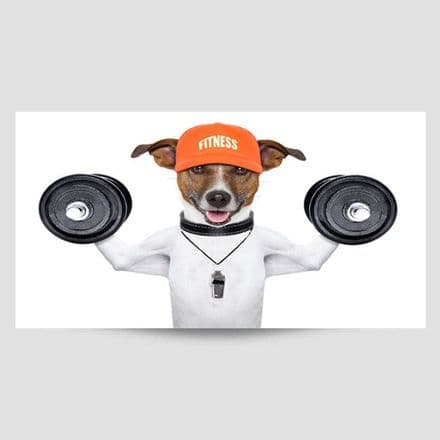 Jack Russell Using Weights Poster