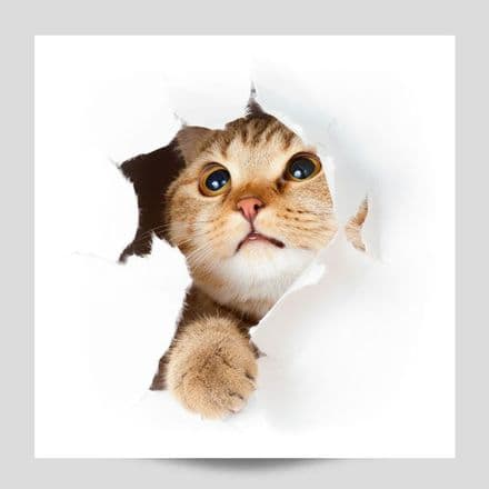 Kitten Bursting Out Of Wall Poster