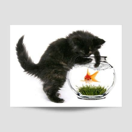 Kitten Playing With A Goldfish Poster