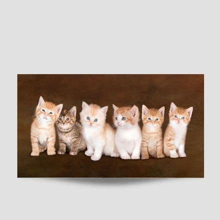 Kittens In A Row Poster