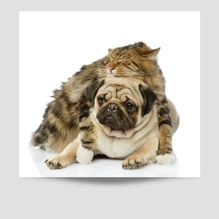 Pug With Cat Poster