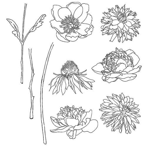 Stampers Anonymous/Tim Holtz - Cling Mount Stamp Set - Flower Garden - CMS215